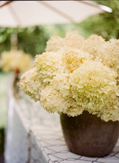 Bunches and bunches of hydrangea, floral design by Kathleen Deery. Photo by Meg Smith. Floral Centerpieces, Floral Arrangements, Pergola, Yellow Cottage, Linen Rentals, Love Garden, Wedding Decorations, Wedding Ideas, Wedding Stuff