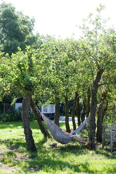Need to get a hammock for my backyard.... When I have one with trees to tie it to!
