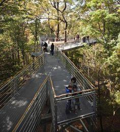 Out on a Limb Tree Canopy Walk - wave avenue