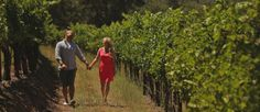 Meet Veronica and Peter. This is their Save The Date Video. These two have a fixation with Napa and a distinct love for wine. Save The Date Video, Pre Wedding Videos, Wedding Film, Napa Valley, Bay Area, Veronica, Couple Photos, Cute, Couple Shots