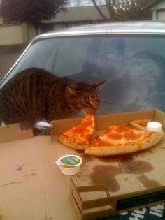 Cats Eating Italian Dinner