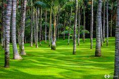 Green... - Beautiful forest inside Loro Park, Tenerife Island Beautiful Forest, Tenerife, Golf Courses, Island, Park, Green, Teneriffe, Islands, Parks