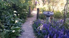 Tickle Tank Open Garden - Rosehips and Rhubarb