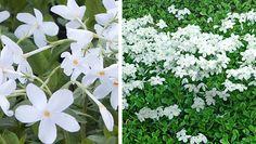 Här är Årets perenn 2017 White Gardens, Garden Inspiration, Beautiful Gardens, Plants, Plant, Planting, Planets