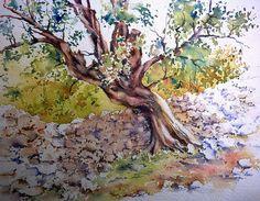 Olive - Kroatien
