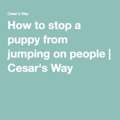 how to stop puppy from jumping