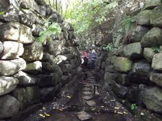 The Forbidden Corner Forbidden Corner, Strange Places, Yorkshire England, Leeds, Roots, Whimsical, Spaces, World, Garden