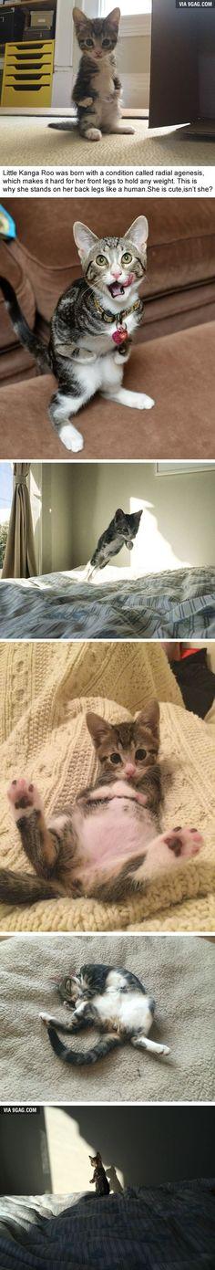 Katze kann ihre vorderen Arme nicht benutzen.....