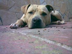 my dog rufus !!