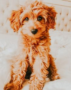 Cute Baby Dogs, Cute Dogs And Puppies, Cute Babies, Doggies, Funny Puppies, Super Cute Animals, Cute Baby Animals, Cut Animals, Animals Dog