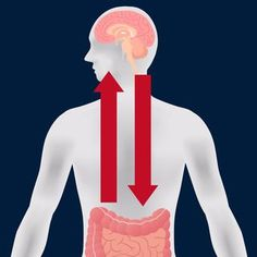 The Microbiome-Gut-Brain Axis Relies on Your Vagus Nerve