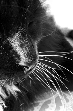 whiskers ~J Manning Photography