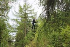 Up in the air! Tree Tops, United Kingdom, The Unit, London, Adventure, Mountains, Nature, Travel, Naturaleza