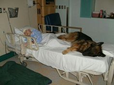 Loyal. Dogs mans best friend they stay with them even when they are afraid.