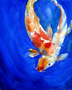 Koi 3   WATERCOLOR