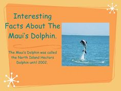 #Fact about #Maui Dolphins..
