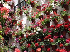 patio de Córdoba