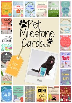 Pet Milestone Cards - Cairn Terrier Collectibles. For photo's!!!!
