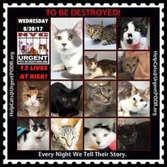 Catson the To Be Destroyed List at NYC ACCThese animals are on the list to be destroyed! Keep in mind that if you are looking at this after 12PM and before 6:30PM, you are likely looking at last