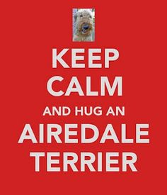Keep Calm and Hug an Airedale Terrier