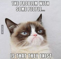 This article lists out 10 Grumpy Cat memes that will make your day. This article also tells you the things that you did not know about Grumpy Cat. Grumpy Cat Quotes, Funny Grumpy Cat Memes, Funny Animal Jokes, Cute Funny Animals, Animal Memes, Funny Cats, Funny Jokes, Funny Cat Quotes, Cat Jokes