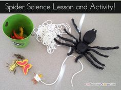 Spider Science activity  This is a great spider science activity.  Perfect for Halloween science.