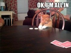 Determined Poker Cat is Determined