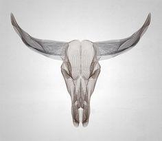 Wireframe animal skull using Illustrator's Blend Tool