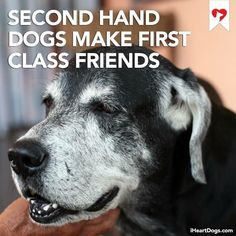 Shelter pets are the best pets. Please do the responsible thing and adopt instead of going to breeders. There are too many abandoned furry babies out there that need homes. Animal Quotes, Dog Quotes, Animal Rescue Quotes, Dog Sayings, I Love Dogs, Puppy Love, Animals And Pets, Cute Animals, Game Mode
