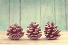 Fine Art Photography- Inspiration from Mother Nature: Three Happy Pinecones