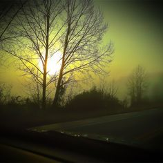 Mist. Morning. Sun. Trees. By Withoutink