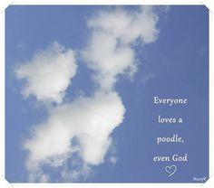 Poodle Cloud Everyone loves a poodle even GOD
