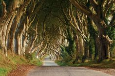 The Dark Hedges by Evzen Takac on 500px