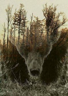 """""""Guardate nel profondo della natura, e allora capirete meglio tutto.""""   Albert Einstein"""
