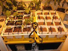 Drip Garden | Hydroponic Systems Round Up