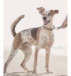 Collar para perro Brott textura Tarragona