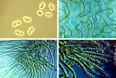 Photosynthesis and Early Earth Ozone Layer, Photosynthesis, Science Art, Earth, Shapes, Green Algae, Google Search, Fungi, Life