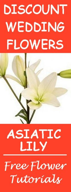 Wholesale Wedding Flowers - Varieties Available in White