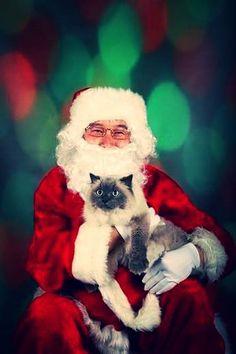 Santa's Lap Kitty