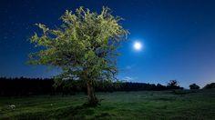 photos of meadows in moonlight | Tree Meadow Stars Full Moon wallpapers | Tree Meadow Stars Full Moon ...