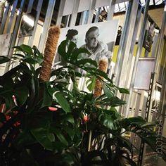 #worldofeames The World of Charles and Ray Eames🌳 18.02.2017-26.05.2017 @ C-mine Genk (BE) #eames #eameschair #furniture #exhibition #belgium #genk #cmine #thomas #bloementhomas #thomashomeandgardeninspiration #hasselt #kuringen #flowershop #plants #flowers #decoration #green #flowersofinstagram #plantsofinstagram #weloveflowers #weloveplants #monstera