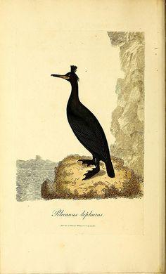 Images patrimoniales histoire naturelle. Biodiversity Heritage Library