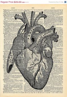 i heart anatomical drawings of hearts.