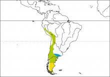 Species distribution range map for Mourning Sierra-finch (Phrygilus fruticeti)