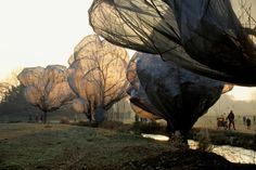 Wrapped+Trees-+Christo+and+Jeanne-Claude.+Kids+Learn+Installation+art+•+Artchoo.com+#arted