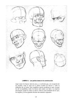 23 LAMINA 6. Las partes óseas en la construcción Aquí vemos los huesos más de cerca, y se advierte que, con excepción de l...