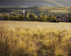 "@balatonfelvidek.hu tartalmat tett közzé az Instagram-profiljában: ""It's already summer and golden wheat fields wave in the evening lights. Have you been to the…"" Wheat Fields, Country Roads, Waves, Lights, Summer, Instagram, Summer Time, Ocean Waves, Lighting"