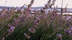 Perfume that recalls summer