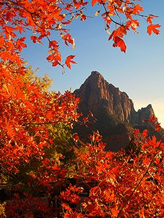 Autumn and The Watchman | Zion National Park, Utah |