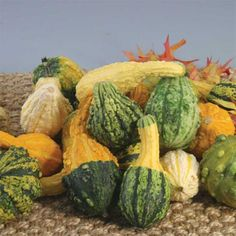 Warty Mix Fancy Gourds